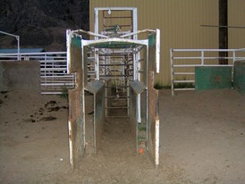 Custom Built Roping Chutes.